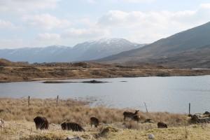 Típico paisaje de las Highlands